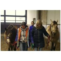 Spürbar und nachhaltig führen-mit dem Pferd als Spiegel