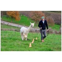 Alpakagestütztes Training: Neue Akzente für Ihre Motivation und Führung